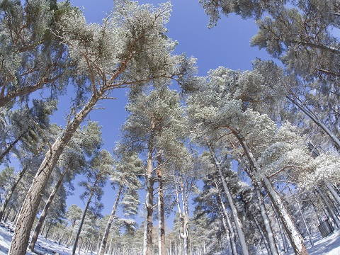 Supporting Sustainable Scottish Forestry
