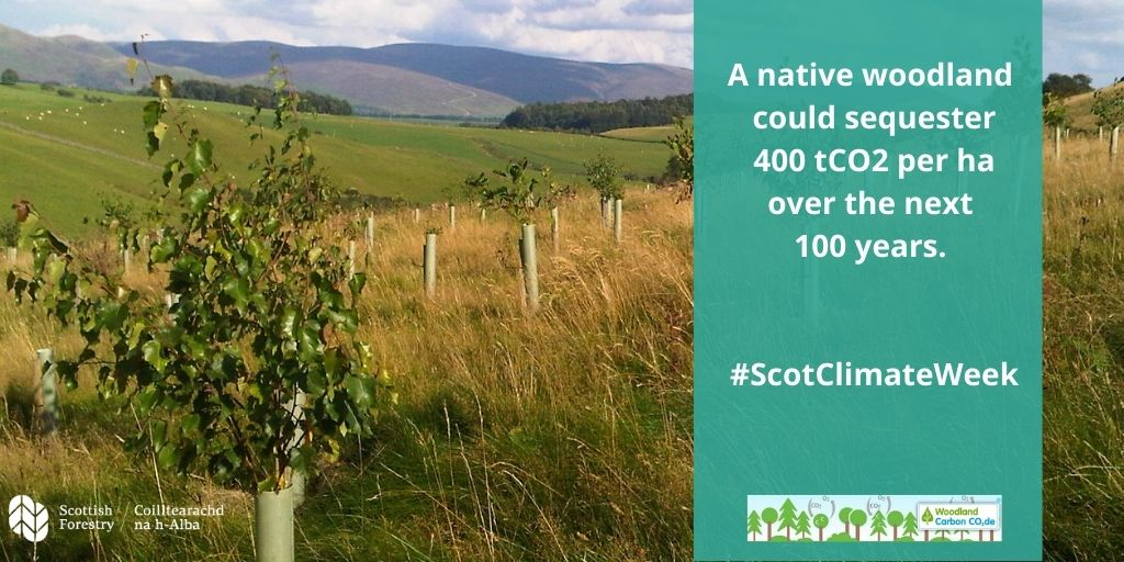 A native woodland could sequester 400 tCO2 per ha over the next 100 years. ScotClimateWeek