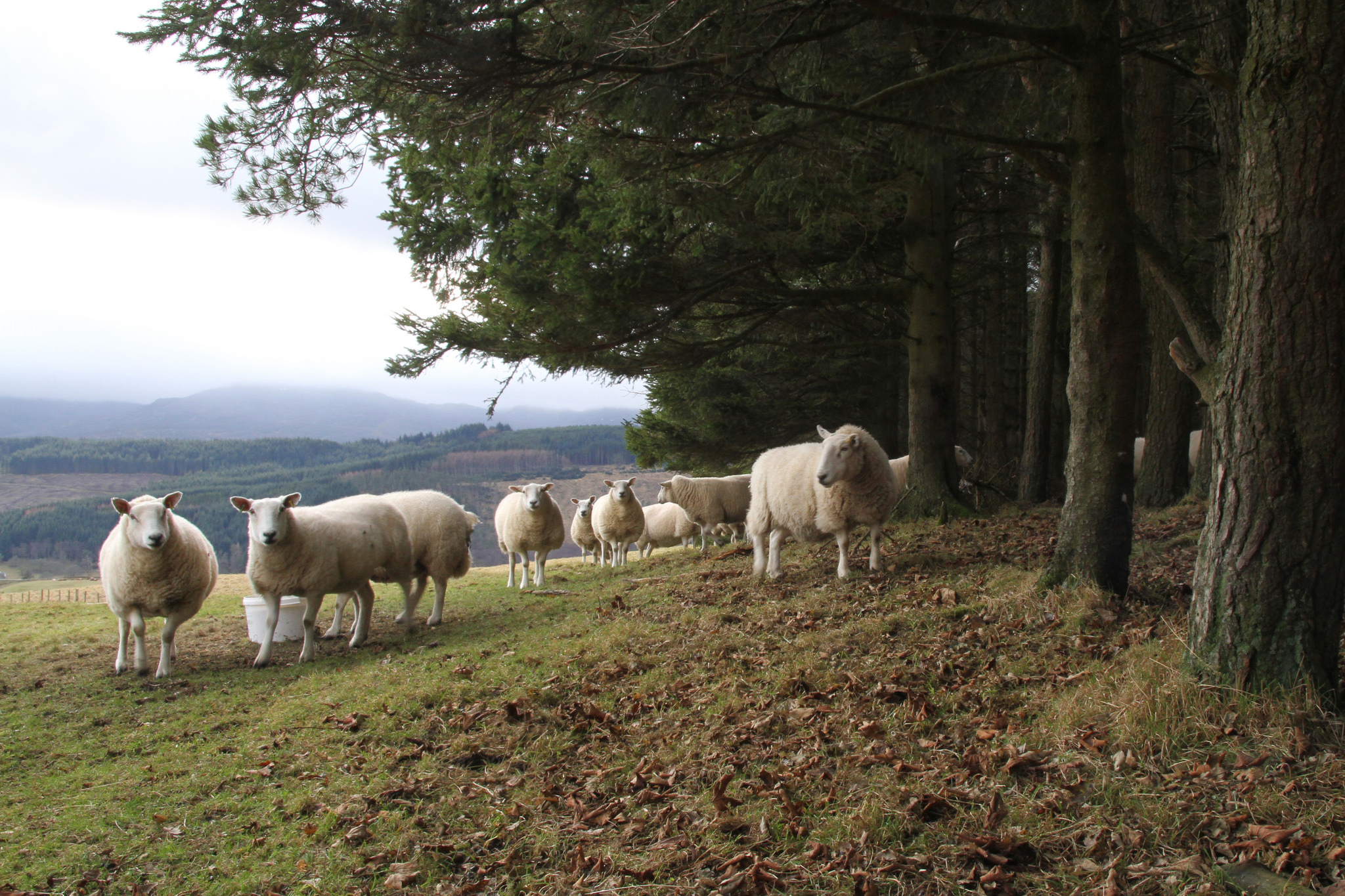 Farmers encouraged to find out about woodland creation grants at Biggar Show