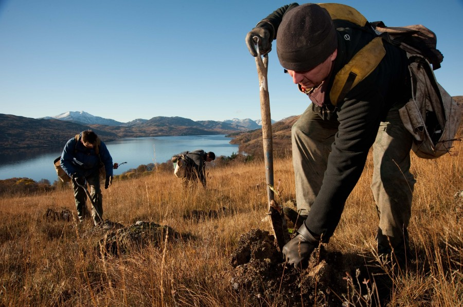 "Scots tree planting ""punching well above its weight"" says Ewing"