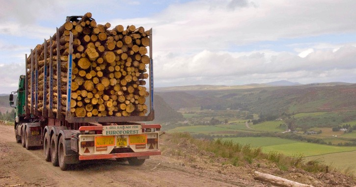 Timber transport lorry