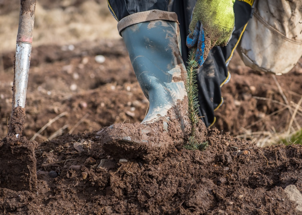 booted foot firming up soil around newly planted seedling