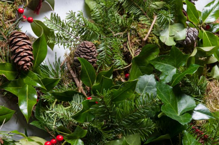 History Of Christmas Tree.A Brief History Of Christmas Trees