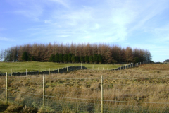 Costs of creating and managing woodland