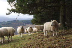 Farm woodlands case studies