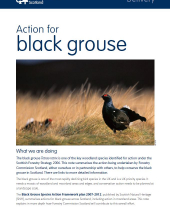 Action for Black Grouse