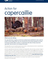 Action for Capercaille