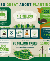 Infographic: What's So Great About Planting Trees?