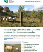 Financial Support for Small-scale Woodland Creation Within Sheep Grazing Pasture