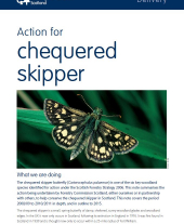 Action for Chequered Skipper