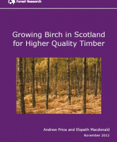 Growing Birch in Scotland for Higher Quality Timber