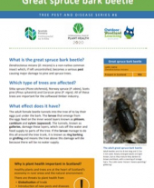 Tree pests and diseases info sheet 6 - Great spruce bark beetle