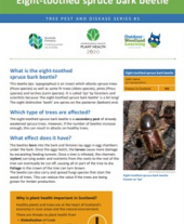 Tree pests and diseases info sheet 5 - Eight-toothed spruce bark beetle