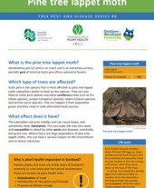 Tree pests and diseases info sheet 7 - Large pine weevil