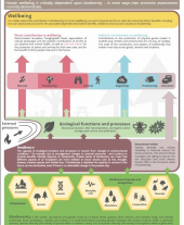 Feasibility Study for the Valuation of Forest Biodiversity Infographic
