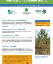 Tree pests and diseases info sheet 2 - Dothistroma needle blight