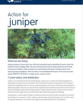 Action for Juniper