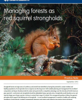 Managing Forests as Red Squirrel Strongholds