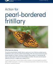 Action for Pearl-Bordered Fritillary