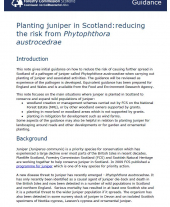 Planting Juniper in Scotland: Reducing the Risk from Phytophthora austrocedrae