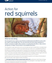 Action for Red Squirrels