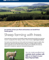 Sheep Farming with Trees Factsheet