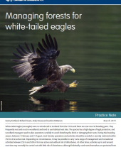 Managing Forests for White-tailed Eagles