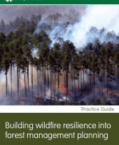 Building Wildfire Resilience into Forest Management Planning